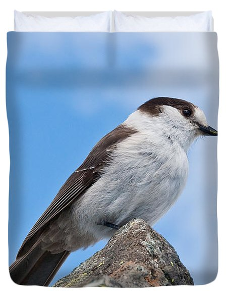 Gray Jay With Blue Sky Background Duvet Cover