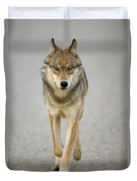 Gray Wolf Denali National Park Alaska Duvet Cover