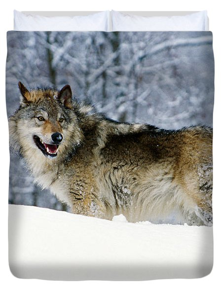 Gray Wolf In Snow, Montana, Usa Duvet Cover