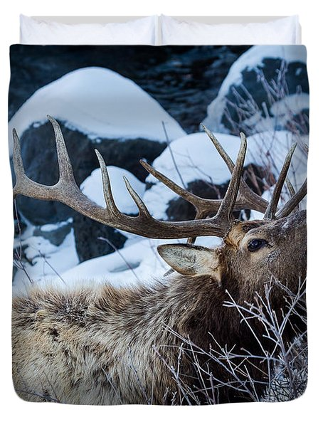Grazing Elk Duvet Cover