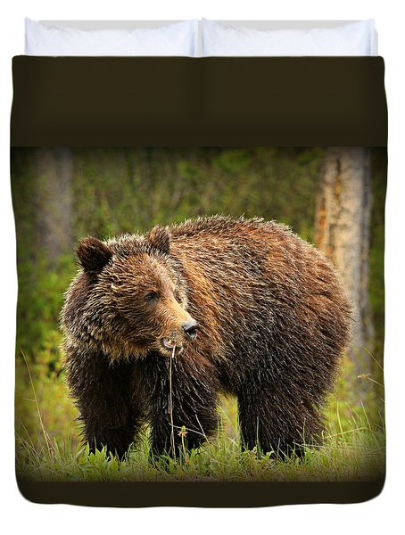 Grazing Grizzly Duvet Cover by Stephen Stookey