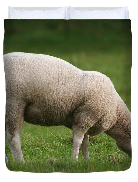 Grazing Sheep Duvet Cover