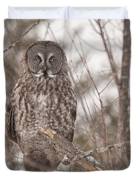 Great Grey Owl Duvet Cover by Eunice Gibb