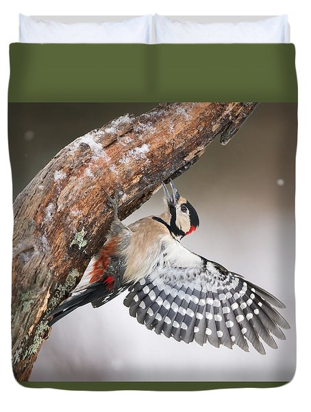 Great Spotted Woodpecker Male Sweden Duvet Cover