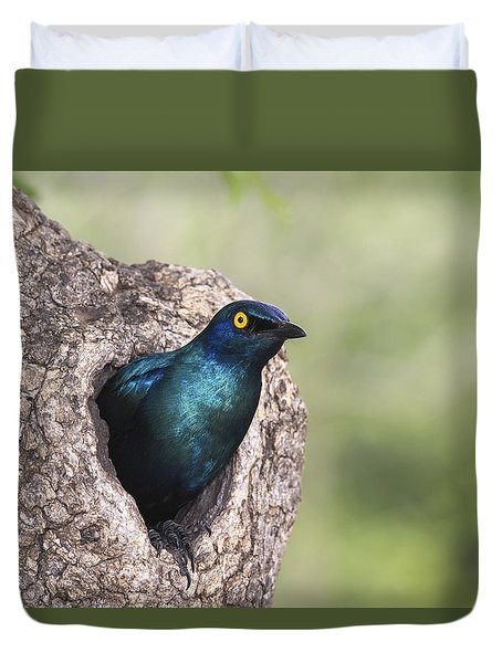 Greater Blue-eared Glossy-starling Duvet Cover by Andrew Schoeman