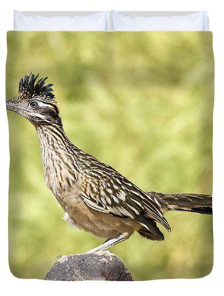 Greater Roadrunner Looking Out Duvet Cover