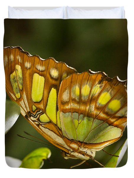 Green And Brown Tropical Butterfly Duvet Cover