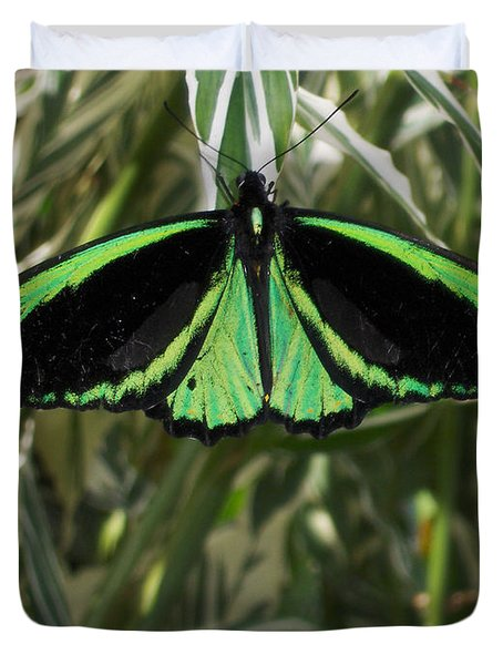 Duvet Cover featuring the photograph Green Butterfly by Brenda Brown