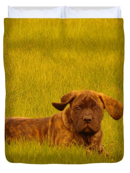 Green Grass And Floppy Ears Duvet Cover by Jeff Swan