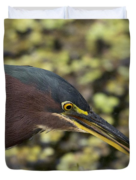 Green Heron Fishing Duvet Cover