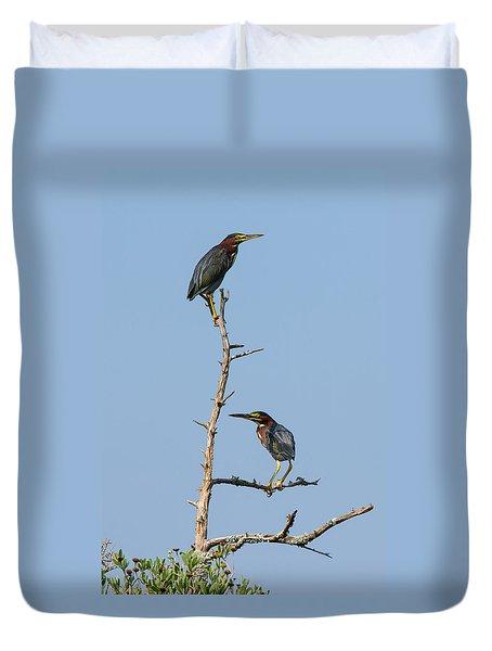 Green Heron Pair Duvet Cover by Paul Rebmann