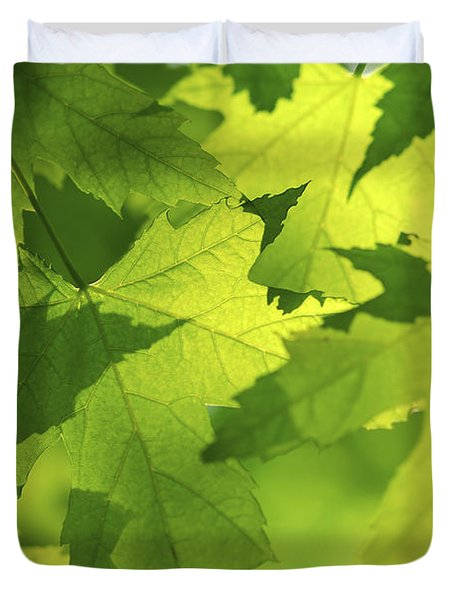 Green Maple Leaves Duvet Cover by Elena Elisseeva