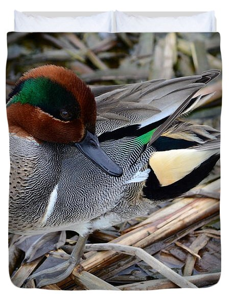 Green-winged Teal Duvet Cover by Debra Martz