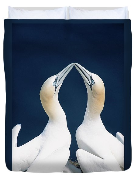 Greeting Gannets Canada Duvet Cover