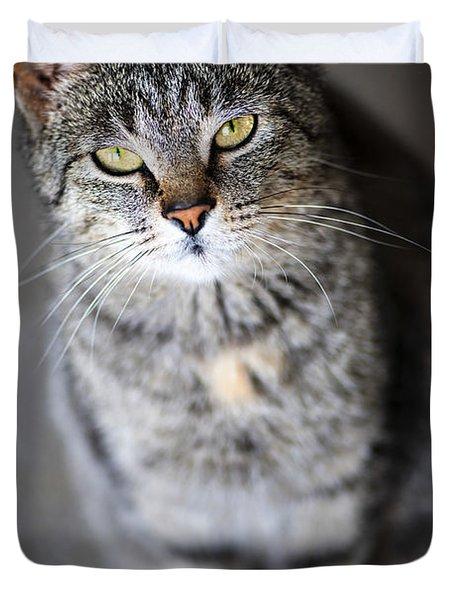 Grey Cat Portrait Duvet Cover by Elena Elisseeva