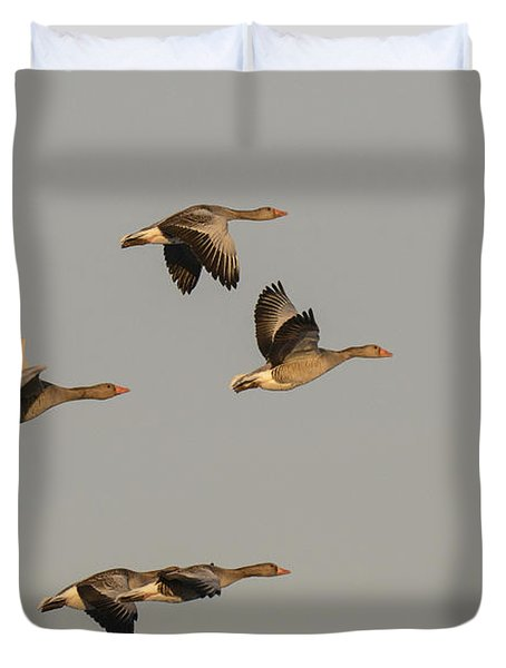 Grey Geese Duvet Cover by Michael Mogensen