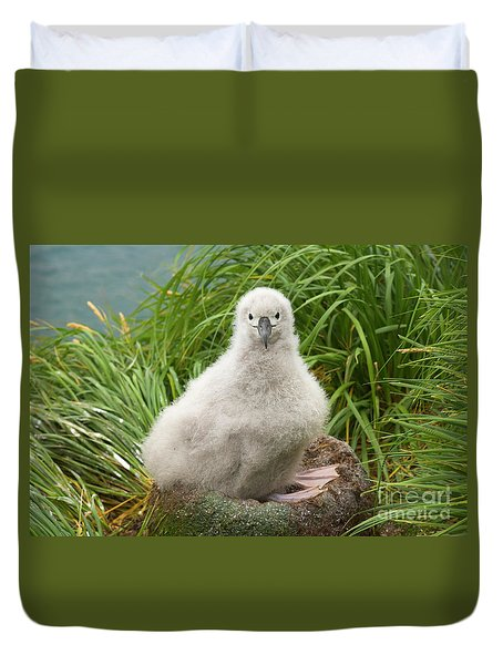 Grey-headed Albatross Chick Duvet Cover by Yva Momatiuk John Eastcott