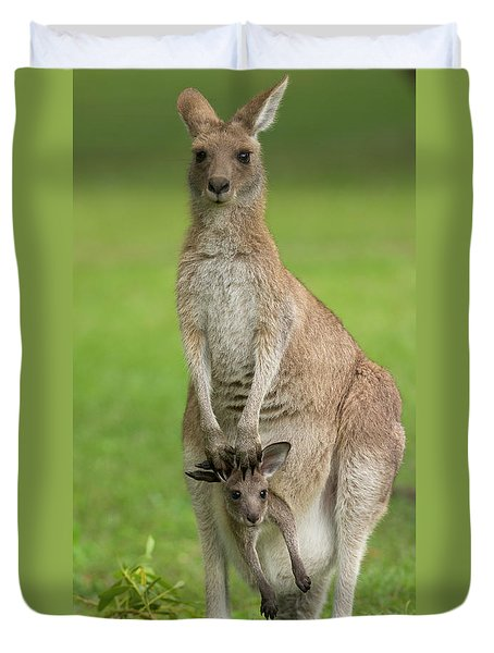 Grey Kangaroo And Joey  Duvet Cover