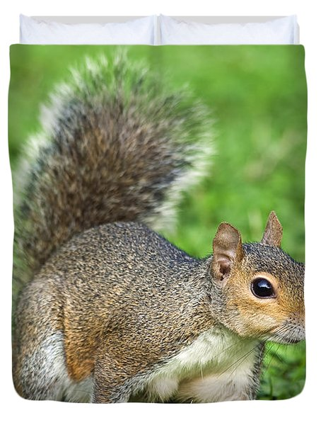 Duvet Cover featuring the photograph Grey Squirrel by Antonio Scarpi