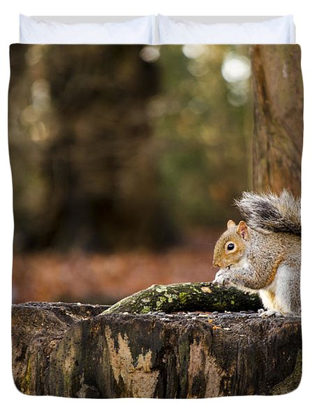 Grey Squirrel On A Stump Duvet Cover
