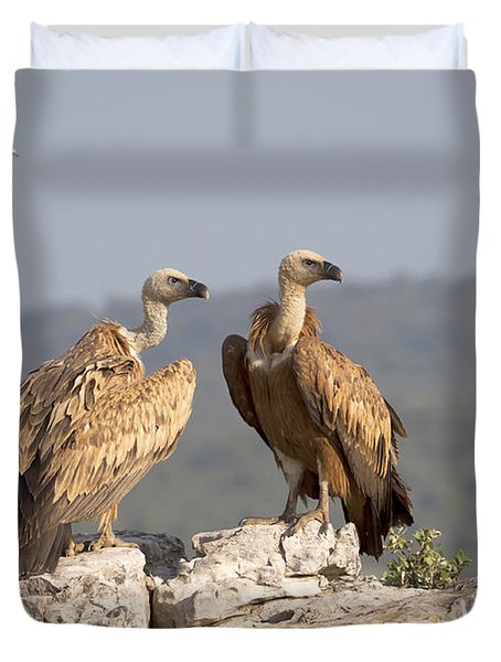 Griffon Vulture Pair Extremadura Spain Duvet Cover by Gerard de Hoog