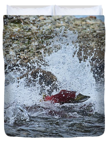 Brown Bear Chasing Salmon While Salmon Jump To Escape Duvet Cover by Dan Friend