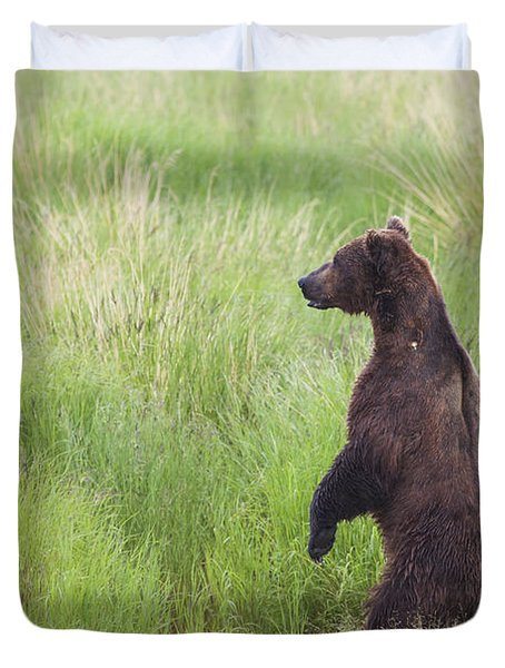 Grizzly Bear Ursus Arctos Standing Duvet Cover by Lucas Payne