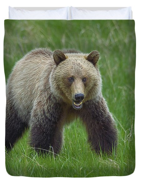 Grizzly Duvet Cover by Tony Beck