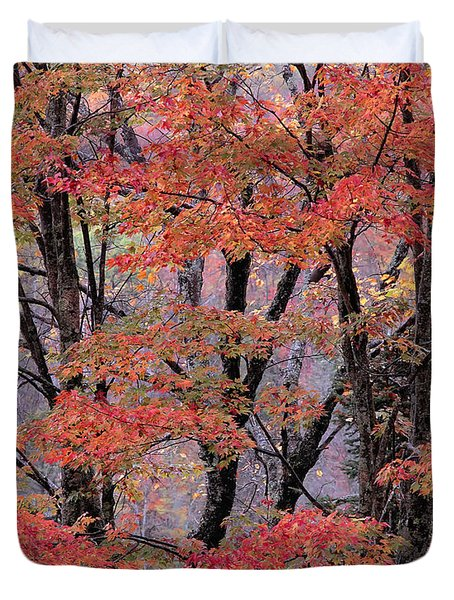 Groton Forest Maples Duvet Cover by Alan L Graham