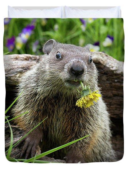 Groundhog  Kit Marmota Monax Duvet Cover by Debbie Dicarlo
