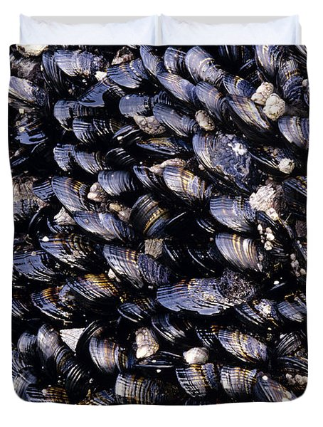 Group Of Mussels Close Up Duvet Cover