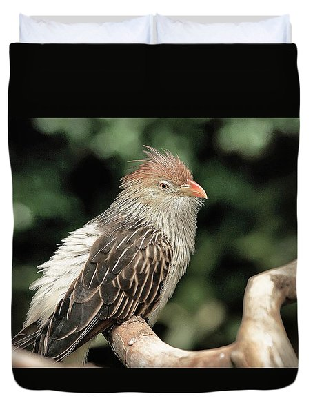 Guira Cuckoo Duvet Cover by Dennis Baswell