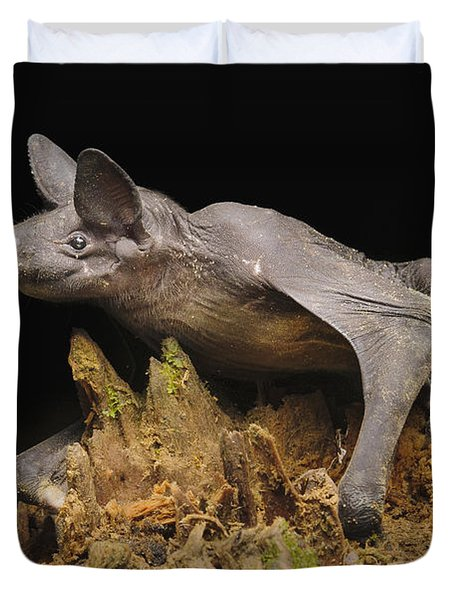 Hairless Bat Tibu Batang Ai Np Malaysia Duvet Cover by Ch'ien Lee