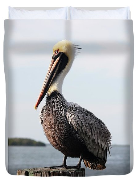 Handsome Brown Pelican Duvet Cover by Carol Groenen