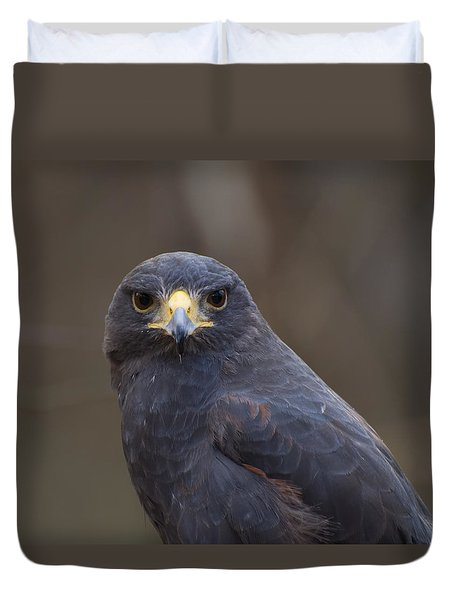 Harris Hawk Duvet Cover by Chris Flees