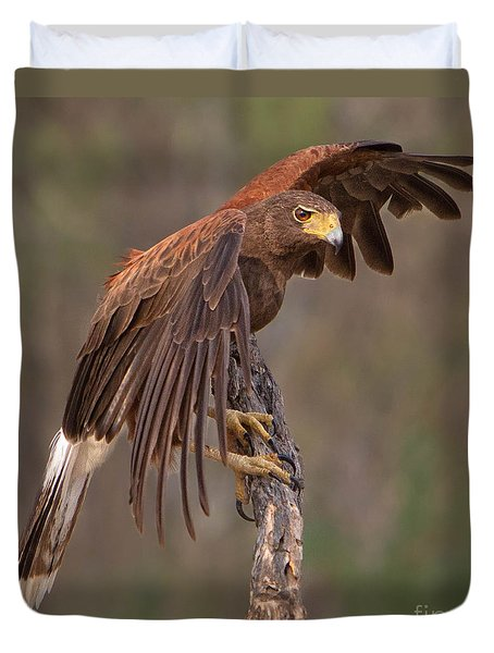 Harris's Hawk 1 Duvet Cover by Jerry Fornarotto