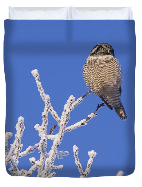 Hawk Owl Perched On Hoarfrosted Duvet Cover