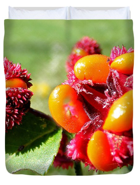 Hearts-a-bursting Seed Pods Duvet Cover by Duane McCullough