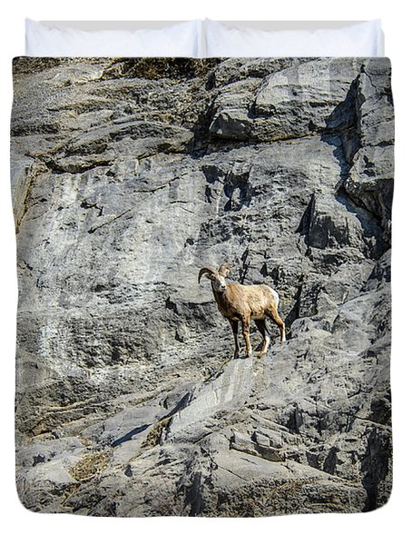 Big Horn Sheep Coming Down The Mountain  Duvet Cover