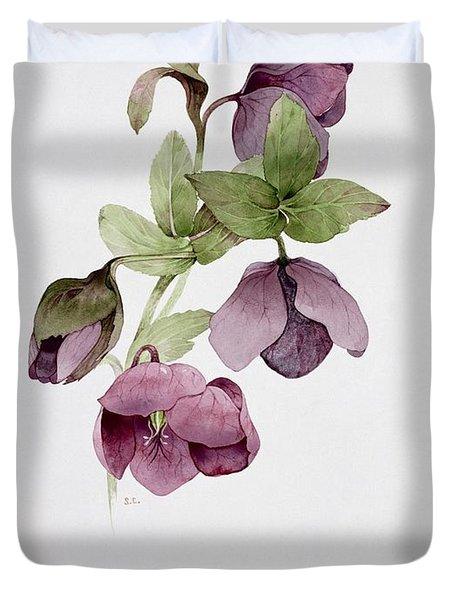 Helleborus Atrorubens Duvet Cover by Sarah Creswell