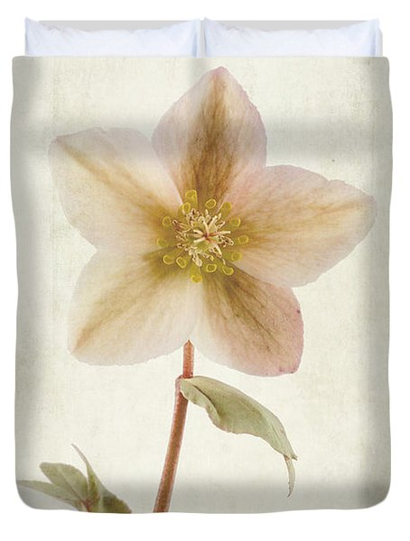 Helleborus Niger Duvet Cover by John Edwards