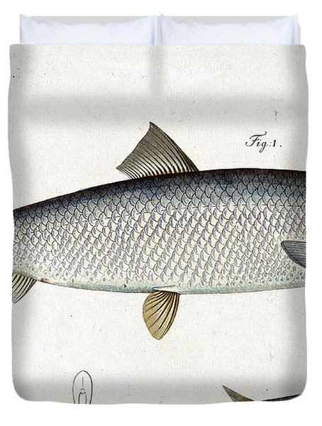 Herring Duvet Cover by Andreas Ludwig Kruger