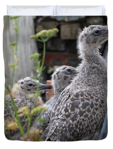 Herring Gull Chicks Duvet Cover