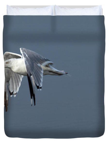 Herring Gull In Flight Duvet Cover by Karol Livote
