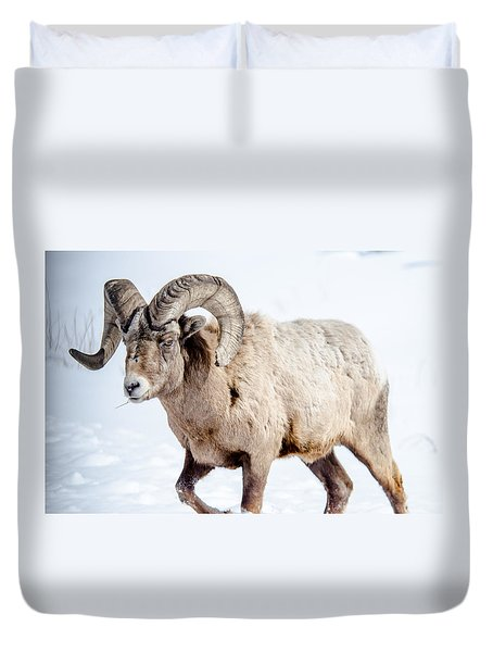 Big Horns On This Big Horn Sheep Duvet Cover