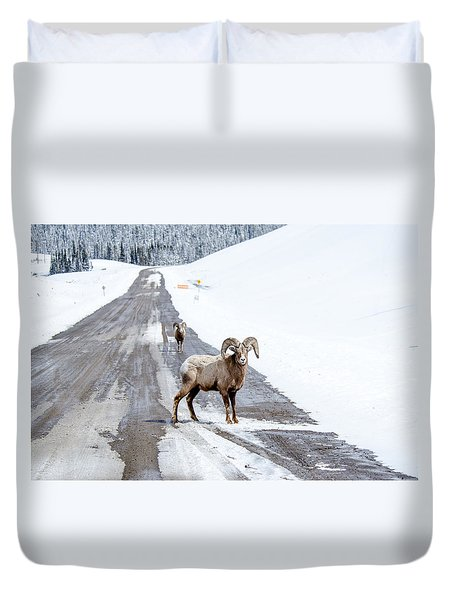 On The Road Again Big Horn Sheep  Duvet Cover