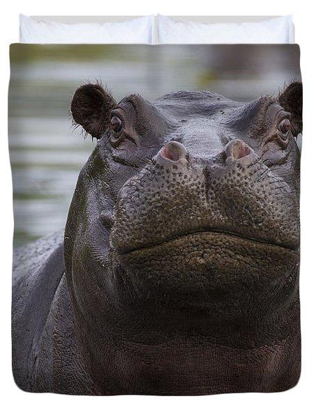 Hippopotamus Bull Khwai River Botswana Duvet Cover by Vincent Grafhorst