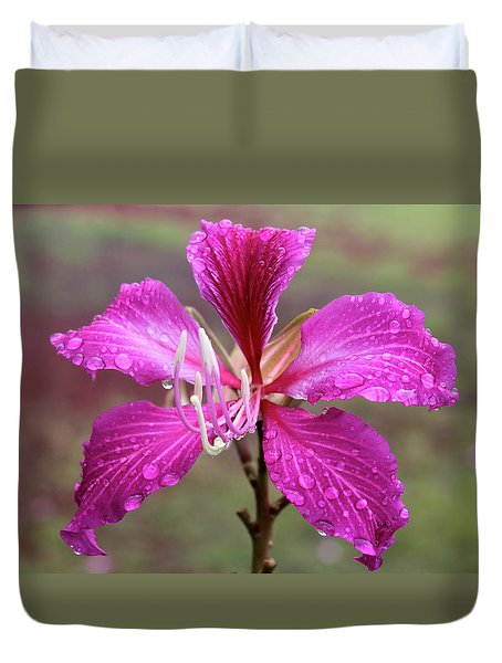 Hong Kong Orchid Tree Flower Duvet Cover by Venetia Featherstone-Witty