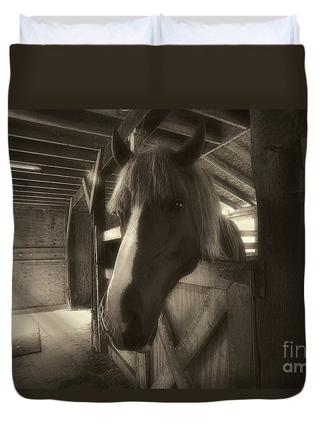 Horse In Barn Stall Duvet Cover by Dan Friend