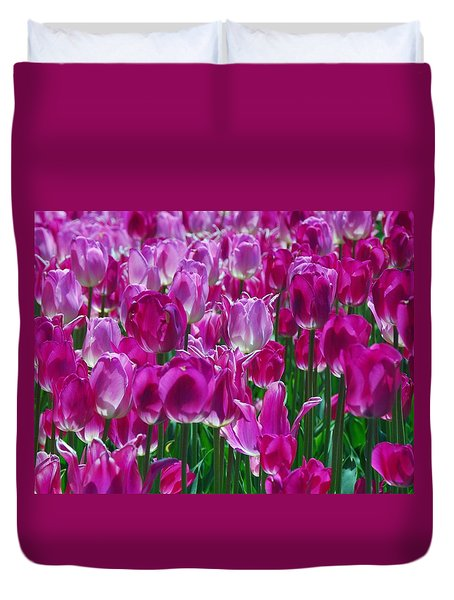 Hot Pink Tulips 3 Duvet Cover by Allen Beatty